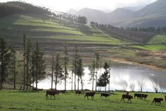 A farm in Greyton SA South Africa, The Good Place, Westerns, Landscapes, Mountains, Country, Nice, Places, Nature