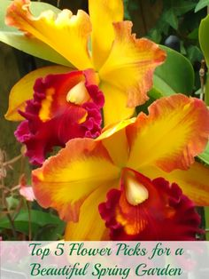 :) - Top 5 Flower Picks for a Beautiful Spring Garden Perfect DIY proj Exotic Flowers, Tropical Flowers, Amazing Flowers, My Flower, Beautiful Flowers, Orchid Flowers, Colorful Flowers, Prettiest Flowers, Red Orchids