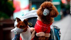 News that a dog tested positive for the coronavirus in Hong Kong likely set off alarm bells this week among pet owners. While there's no indication the virus can spread to humans from dogs, some experts say there may be a need for quarantines. Wuhan, Bbc, Dog Test, Hongkong, Animal Protection, Small Puppies, Animal Faces, Pet Health, Dog Owners