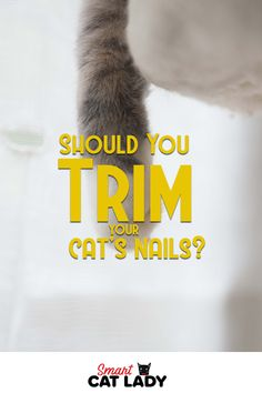 Should You Trim Your Cat's Nails? Are your cat's nails too long? Should you trim your cat's claws? If so what's the best way to trim cat nails? Check out these cat grooming tips and find out what you should do if your cat's nails are overgrown. Cat Care Tips, Pet Care, Pet Tips, Trim Cat Nails, Purebred Cats, Prey Animals, Curiosity Killed The Cat, Long Haired Cats, Cat Behavior