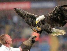 A 19-year-old bald eagle is being forced to entertain soccer fans under stressful and dangerous conditions. Demand that this abused animal be allowed to live out the rest of her life in peace.