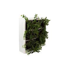 D&M Depot Karoo Verticale Plantenbak 40 x 40 cm Herbs, Wood, Nature, Plants, David, Orange, Ideas, Naturaleza, Woodwind Instrument