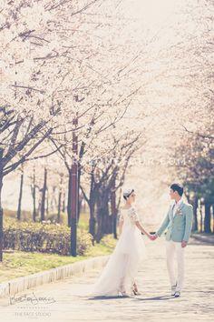 Korean Outdoor Pre-Wedding Photography: The Face Studio - Seonyudo Park (선유도 공원), Spring, Cherry blossom
