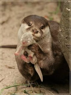 Otter Mom Showing Us Her Baby