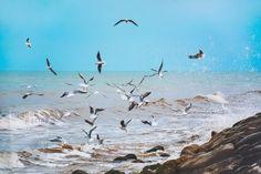 Pet Pigeon, Free High Resolution Photos, Hd Images, Nature Photos, Pets, Animals, Gull, Racing, Running