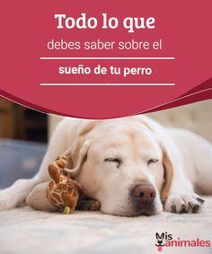 Todo lo que debes saber sobre el sueño de tu perro  Descubre cuanto has de saber sobre el sueño de tu perro gracias al blog de Mis Animales y aprende a que tenga el descanso que se merece a todas horas. #sueño #perro #descanso #alimentación