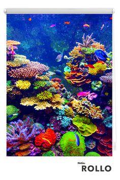 Mein Rollo - das Rollo zum Selbstgestalten. Auf www.meinrollo.de kannst Du Dich inspirieren lassen und aus über 1000 tollen Rollo-Motiven das schönste für Dein Zuhause finden. Viel Spaß beim Aussuchen!(Meer, Unterwasserwelt, Korallenriff, Fische, Sonnenschutz, Fensterdeko, Klemmfixrollo)