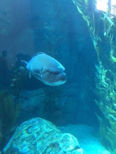 The Aquarium of the Pacific in Long Beach, CA is a wonderful place to visit, filled with educational opportunities and fun activities for the whole family. Long Beach, Wonderful Places, Fun Activities, Aquarium, Places To Visit, California, Animals, Goldfish Bowl, Animales
