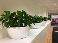 Nyplanterat på väla kontoret