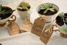 plantas en tazas vintage