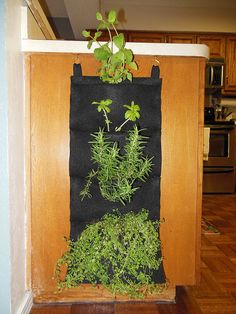 A living wall of herbs on an unused side cabinet in the kitchen! Beautiful and functional.