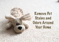 How to Remove Pet Stains and Odors Around Your Home #pets