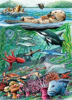 Cobble Hill Life on the Pacific Ocean 35 Piece Jigsaw Puzzle: A great learning activity that grows with the child. This is a fun 35 piece tray puzzle with interesting facts about the image on the back of each puzzle! For ages 3 and up River Painting, Painting Art, Military Discounts, Puzzles For Kids, Travel Activities, Puzzle Pieces, Pacific Ocean, Sea Creatures, Habitats