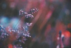 De flor a semilla ; el ciclo de la vida.  #conservatuscolores #fotografía #details #naturaleza