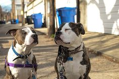 If you haven't yet had the pleasure of reading about Two Pitties in the City, this article is a great place to start.