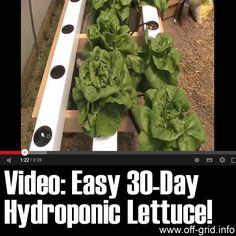 Easy 30 Day Hydroponic Lettuce! - Off-Grid