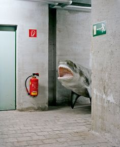 Giant Toad, Angry Shark, Hungry Bear: Behind The Curtain At A World-Class Museum | Co.Design: business + innovation + design