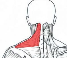 This is a great myofascial release for your tight neck or shoulder - Freedom! And all you need is a ball.