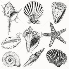 Love the idea of a seashell tattoo