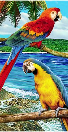 Parrot in Paradise Deluxe Endangered Beach Towel - Tolle Bilder 1 - Tropical Art, Tropical Birds, Exotic Birds, Colorful Birds, Pretty Birds, Beautiful Birds, Animals Beautiful, Parrot Painting, Beautiful Nature Wallpaper