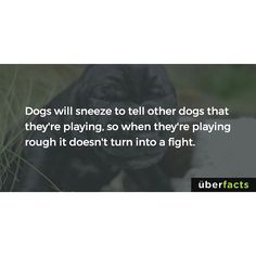 """1,935 Likes, 56 Comments - UberFacts (@uberfacts) on Instagram: """"The sneezes are intentional and if you've ever seen two dogs wrestle, you probably have seen this.…"""""""