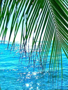 Aloha! Glistening sun on crystal turquoise waters ....this is PARADISE .. VixenTam