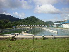 DXN International Pvt. Ltd. Spirulina Farm in Malaysia