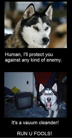 This is my dog for sure