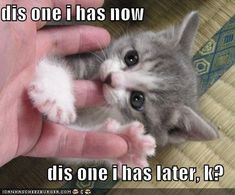 Cute funny Cats and kittens images;Cute funny cats and chicks,cats and dogs,and cute cats and kittens funny photos,More. Cute Kittens, Cats And Kittens, Cute Funny Animals, Funny Cute, Hilarious, I Love Cats, Crazy Cats, Funny Cat Wallpaper, Cat Posters