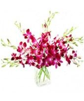 Beautiful Orchids - purple dendrobium orchids in a vase alone