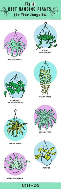 Hanging Indoor Plant Guide Will Help You Pick the Best Greenery for Your Space Bookmark this for 8 trendy hanging plants youll want to add to your home ASAP.Bookmark this for 8 trendy hanging plants youll want to add to your home ASAP. Garden Plants, Indoor Plants, Patio Plants, Indoor Gardening, Organic Gardening, Plants For Room, Wall Hanging Plants Indoor, Indoor Hanging Baskets, Best Plants For Bedroom