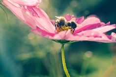 Bee Print Flower Photography Nature photography by JudyStalus