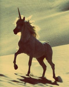 remember the day when we believed there were really unicorns?