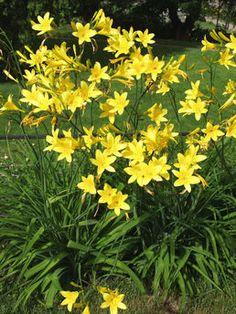 Garden Plants, Shrubs, Perennials, Natural Beauty, Summertime, Flora, Nature, Digital Camera, Trees