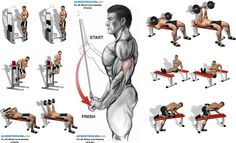 Triceps are an often overlooked body part. Everyone wants a big fan-shaped chest…