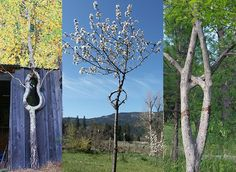 Arborsculpture is a unique technique of shaping young trees into artistic or useful shapes, by grafting or pruning. Creating just one arborsculpture sometimes takes over ten years