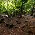 A team of archaeologists from Colorado State University has discovered an ancient city in the Honduran rainforest complete with stone artifacts dating to 1000 to 1400 A.D., National Geographic reports.