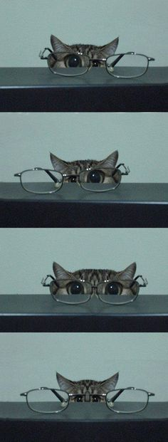 Reminds me of my kitties - AWW - - kitty & glasses I'm training to be a private eye. Let's see should I use this eye or this eye or both eyes? I think this might be harder than I thought. The post Reminds me of my kitties appeared first on Gag Dad. I Love Cats, Crazy Cats, Cute Cats, Funny Cats, Funny Humor, Cats Humor, Cat Fun, Funny Sayings, Farts Funny
