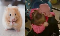 This little boy can't believe it when his sister uses her birthday money to surprise him with a new pet. The video is adorable.