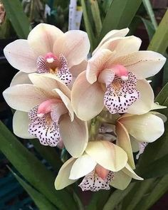 Unusual Flowers, Amazing Flowers, Beautiful Roses, Pretty Flowers, Strange Flowers, Orchid Plants, Exotic Plants, Orquideas Cymbidium, Beautiful Flowers Wallpapers