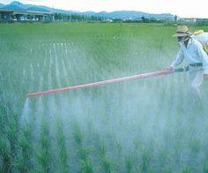 Uso de agroquímicos en producción de alimentos influye en aumento de cáncer y Alzheimer