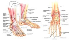 Fix Your Feet: Mobility, Strength, and Flexibility Exercises for Foot and Ankle Health