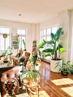 This New Zealand Home in a 1920s Converted Factory Is a Plant Lover's Dream — House Call