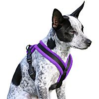 Clean Run: Walkeez Fleece-lined Harness. A fleece-lined harness will prevent rubbing and unpleasant soreness for your doggie :)