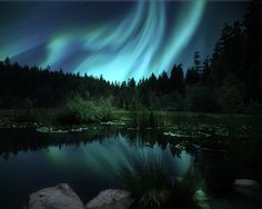Northern Lights shining over a Lily Pond near Jasper Canada