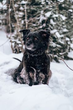 Tips to Keep Your Dog Safe in Winter, handsome dog sitting in snow, winter dog photography ideas | ©AW Creates, #snowdog #dogphotography mixed breed, Brian Head, Utah Dog Portraits, Family Portraits, Brian Head, Animal Photography, Photography Ideas, Snow Dogs, Cute Animal Pictures, Mixed Breed, Beautiful Dogs
