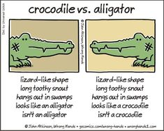 The Differences Between a Crocodile vs an Alligator