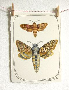 Moth Original Watercolor  by michele maule