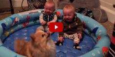 This Pomeranian Pup's Trick Makes These Baby Twins Laugh Their Heads Off