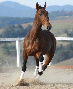 Horse I love them